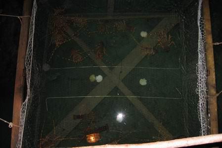 Slika Jastožera 5